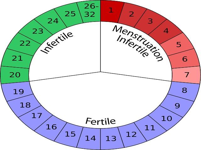 Calendario Ovulazione Giorni Fertili.Periodo Fertile Calcolo Dei Giorni Fertili Dopo Il Ciclo